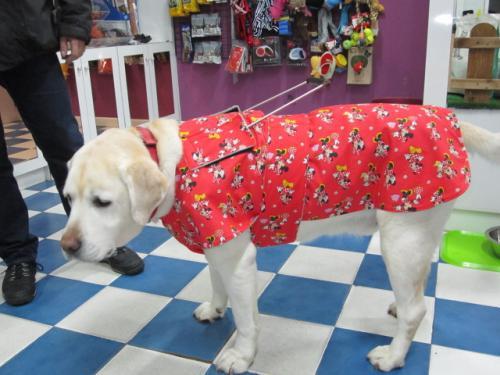 Gary y abrigo para perro guía